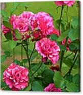 Double Roses Canvas Print