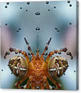 Double Spider Canvas Print