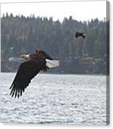 Double Trouble Eagles Canvas Print