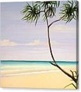 Doum Palm Canvas Print