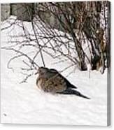 Dove In The Snow Canvas Print