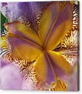 Down Into The Iris Canvas Print