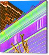 Downtown Cholla II Canvas Print