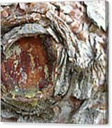Dragon Eye Canvas Print