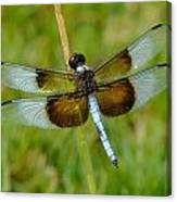 Dragon Fly Grass Canvas Print