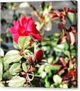 Dragon Fly Rose Bud  Canvas Print