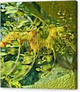 Dragon Seahorse Canvas Print