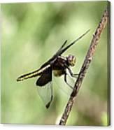 Dragonfly - Yellow Stripe Canvas Print