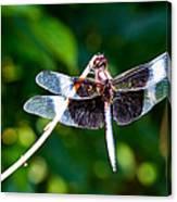 Dragonfly 0002 Canvas Print