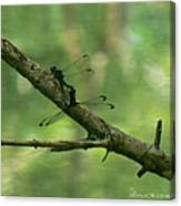 Dragonfly Hanky Panky Canvas Print
