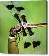Dragonfly In Black 2 Canvas Print