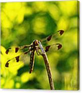 Dragonfly In Green Canvas Print