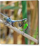 Dragonfly Love Canvas Print