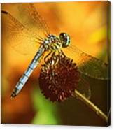 Dragonfly On A Dried Up Flower Canvas Print