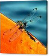 Dragonfly On A Paddle Canvas Print