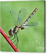 Dragonfly On A String Canvas Print