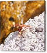 Dragonfly On Larva Rock Canvas Print