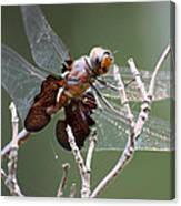 Dragonfly On The Tree Canvas Print
