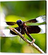 Dragonfly Stalking Canvas Print