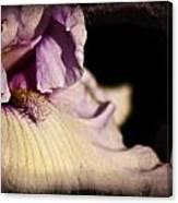 Drama In Purple Canvas Print
