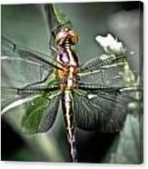 Drangonfly Canvas Print
