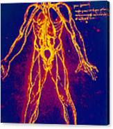 Drawing Of Human Venous System (leonardo Da Vinci) Canvas Print