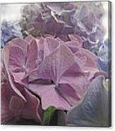 Dream Hydrangeas Canvas Print