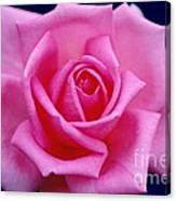 Dream Rose Canvas Print