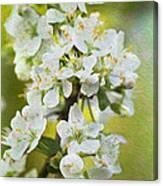 Dreamy Blossom. Canvas Print