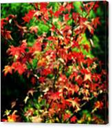 Dreamy Fall Leaves Canvas Print