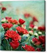 Dreamy Red Mums Canvas Print