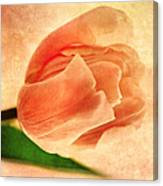 Dreamy Vintage Tulip Canvas Print