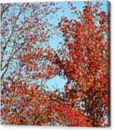 Dressed For Autumn Canvas Print
