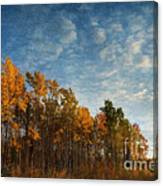 Dressed In Autumn Colors Canvas Print