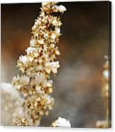 Dried Flower And Crystals Canvas Print