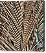 Dried Palm Fronds Canvas Print