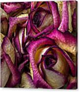 Dried Pink And White Roses Canvas Print