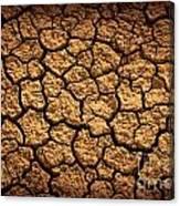 Dried Terrain Canvas Print