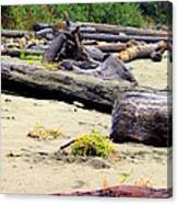 Drift Logs Canvas Print