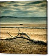 Driftwood 1 Lomo Canvas Print