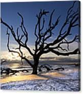 Driftwood Beach At Dawn Canvas Print