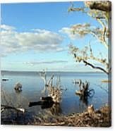 Driftwood Landscape 1 Canvas Print
