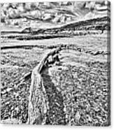 Driftwood Sketch Canvas Print