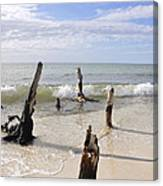 Driftwood Stands Watch Canvas Print