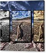 Driftwood Triptych Canvas Print