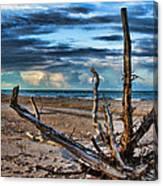 Driftwood V2 Canvas Print