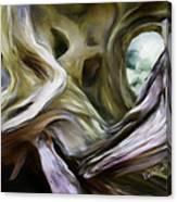 Driftwood Window Canvas Print