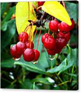Drips And Berries Canvas Print