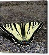 Driveway Butterfly Canvas Print