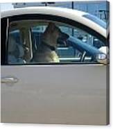Driving Dog Canvas Print